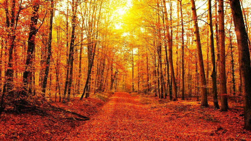пътя през есента е опасен!